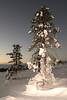 FINLAND - Near Saariselka, Lapland - Jan 2005