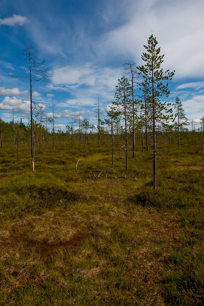 Tunturiaapa trail in Pyhä-Luosto National Park