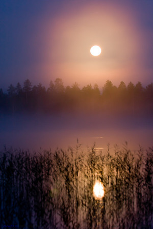 Yellow moon over the lake (2).  A unique experience: being awakened in the middle of the night by the sounds of nocturnal animals, I got out of the hut and just out there discovered that the evening had presented me a splendid full moon that, adorned by the mists at night, perched over the lake. And an absolute solitude and silence.  Hossänjarvi, Oulu. Finland.