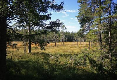 Skuluskogen National Park, Zweden.