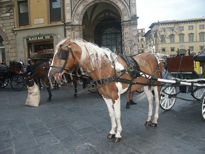 Rome Horse