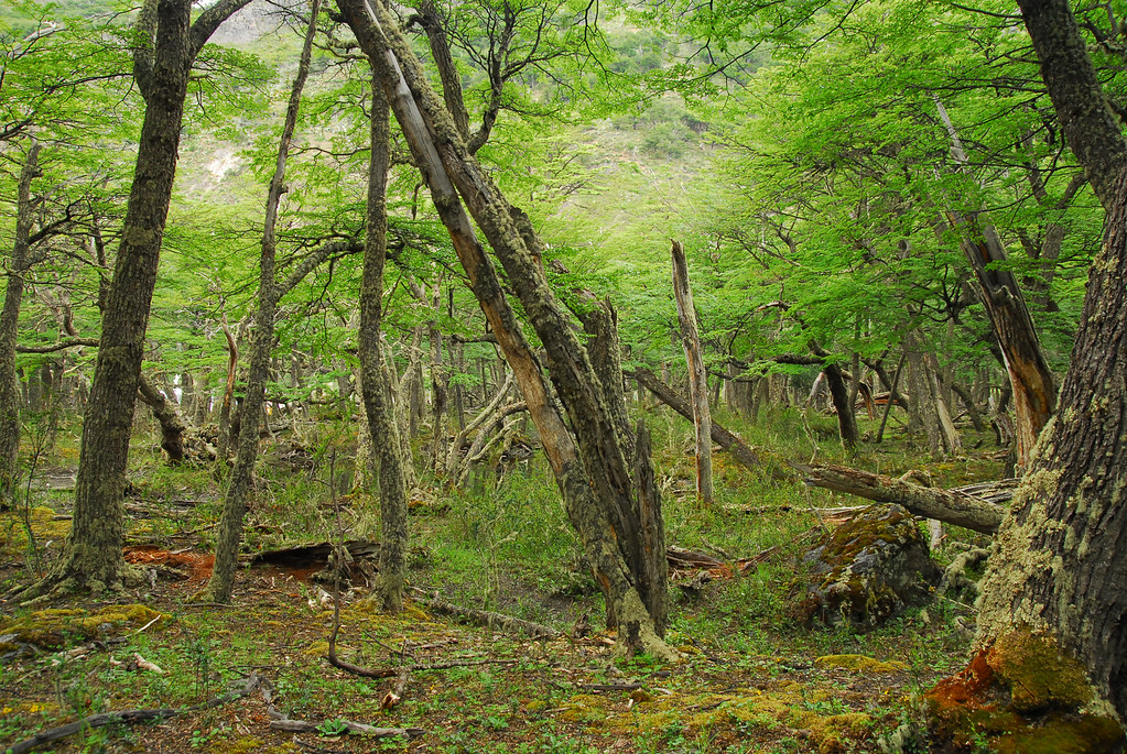 Lush sub-tropical forest