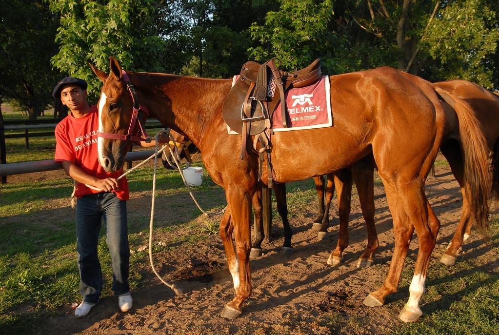 Horse groomer
