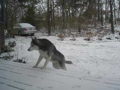 First Snow on Cape Cod '08