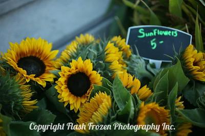 Sunflowers at the Ferry Building Farmer's Market  San Francisco, California 2006