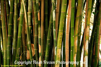 Bamboo 2007