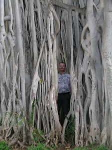 An Aloha shirted gnome in the Banyan tree.  This tree is being eaten by temites and may have to be taken down.  Just to clarify Allen is not a termite.