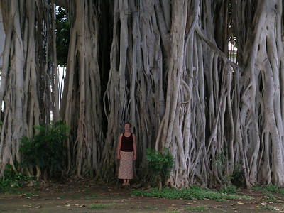 The gnome comes out of the Banyan tree