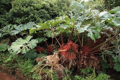 Flora of Costa Rica