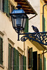 Streetlamp and pigeon, Florence, Firenze, Italy