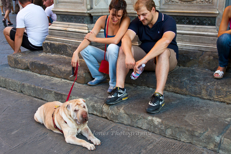 Shar Pei dog, Florence, Firenze, Italy