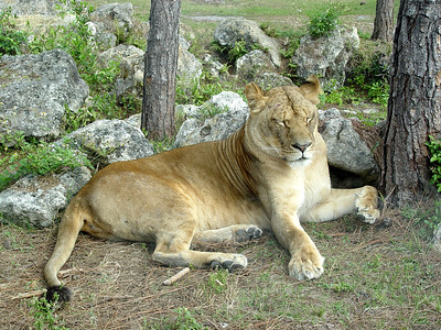 Lion Country Safari / February 5, 2005