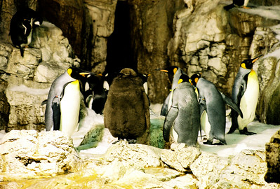 SW Penguins 08
