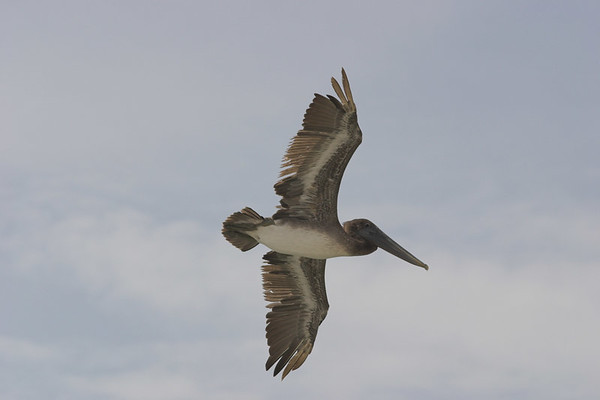 Birds of Cape San Blas