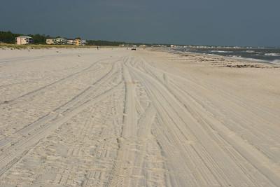Shells Along the Shore