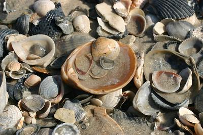 Shells Within Shells (3)