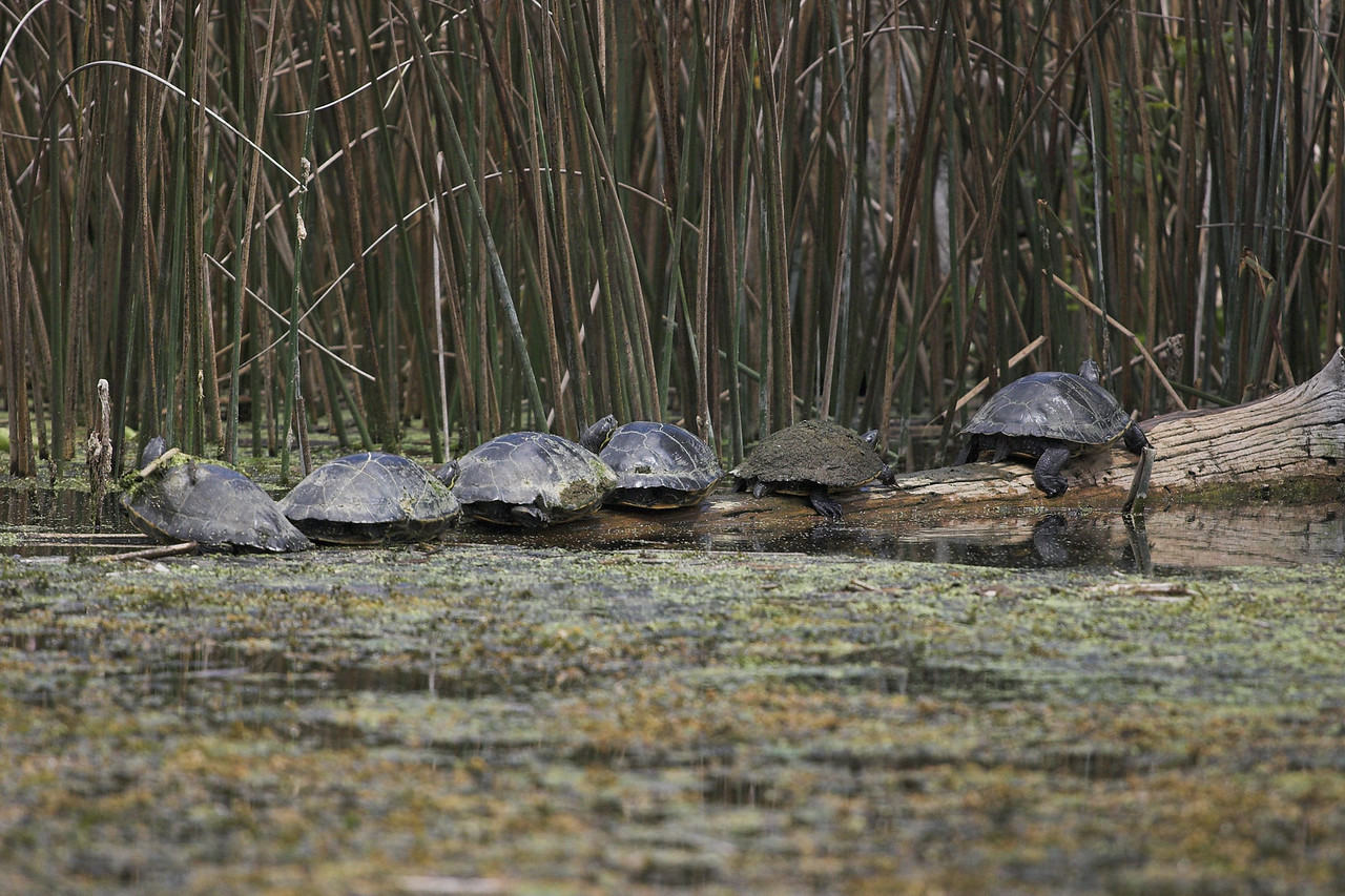 "Turtles at the ""Shell Station"""