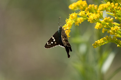 Butterfly, St Marks National Wildlife Reserve