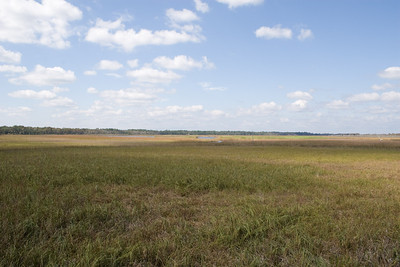 Apalachicola Estuary