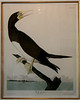 There are 28 first edition Audubon works in the house.  Photos of some of those works follow . . .