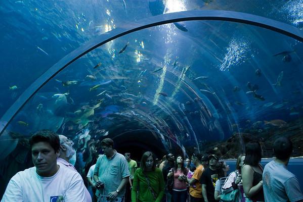 Georgia Aquarium 2008