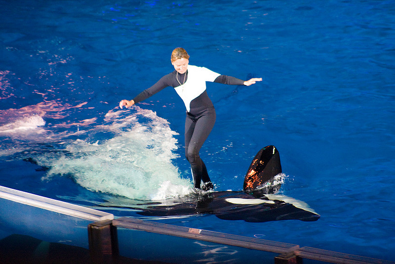 whale trainer riding a spinning whale