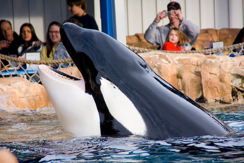 We dined with Shamu and got to see him up close