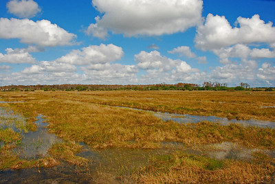 Nearly all of the Everglades is submerged under several inches of water slowly moving south from Lake Okeechobee to Florida Bay.