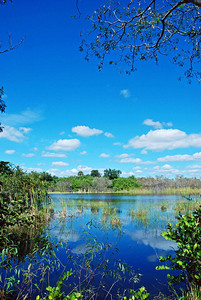Blue Sky, Blue Water – of all the amazing sights in the Everglades, the intensity of blue in the sky and reflected in the open waters is one of the most arresting. The clouds are ever shifting, the light constantly shifting, but the brightness and clarity of color are a constant.