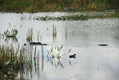 Arthur R. Marshall Loxahatchee National Wildlife Refuge is located seven miles west of the city of Boynton Beach in Palm Beach County, Florida.