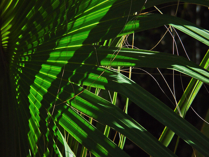 Palm tree fronds and high contrast sunlight create stunning patterns.