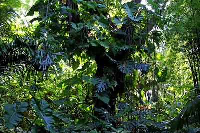 Nancy Forrester's Secret Garden - Key West