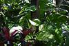<b>Nancy Forrester's Secret Garden</b>