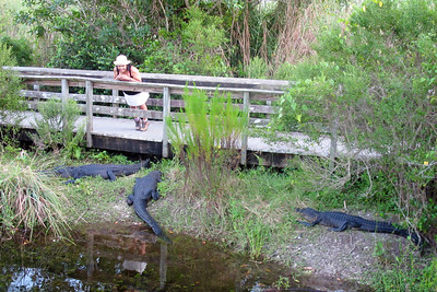 Grace and three of her closest friends on the Anhinga Trail in the Everglades.