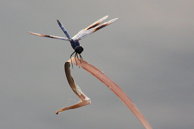 Okay, so dragon flies are a bit ugly.  But, hey, they eat mosquitos, so they can't be all bad.
