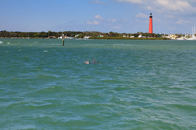 Dolphins in Ponce Inlet