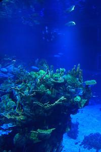 The Aquarium at Epcot