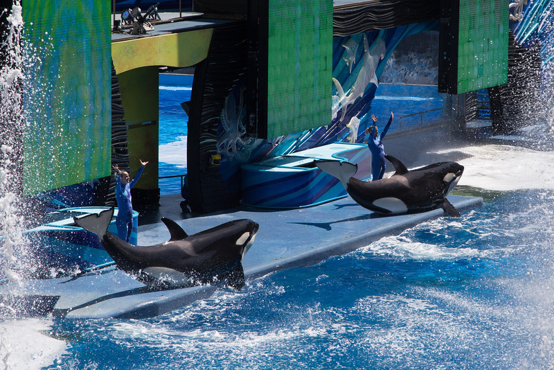 SeaWorld-2176
