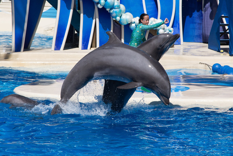 SeaWorld-2275