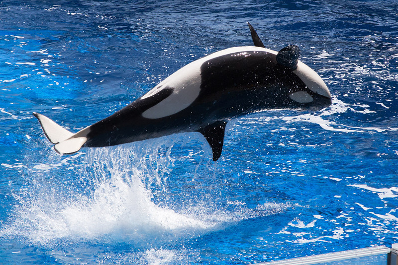 SeaWorld-2162