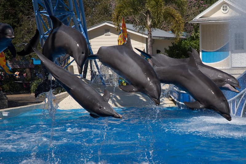 SeaWorld-2295