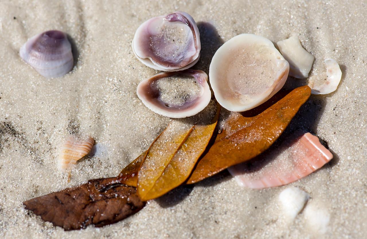 Clearwater  Beach, Florida - February 2015