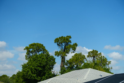 Roofs, Trees, Clouds