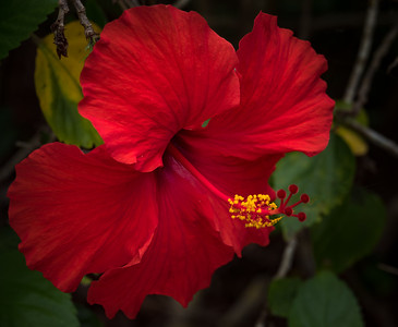 Sarasota Jungle Gardens - -The Walk--04218