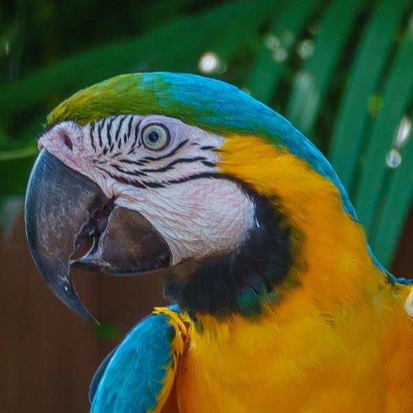 Sarasota Jungle Gardens-04185