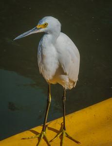 Pier 22 - Bradenton-04154