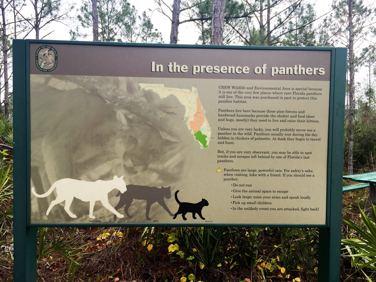 Panther sign at CREW Marsh Trail, FL - January 2018