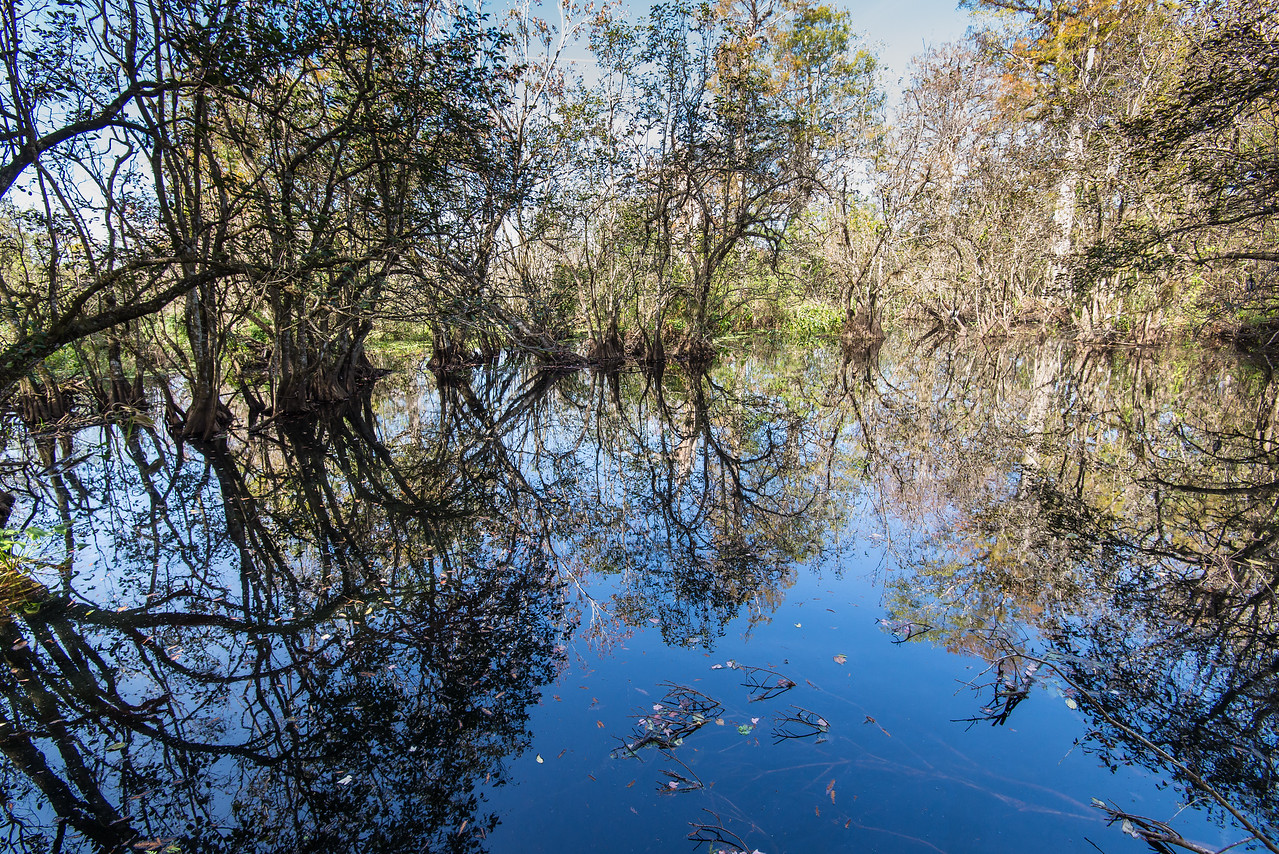 Lettuce Lake in Corkscrew Swamp Sanctuary, FL - January 2018