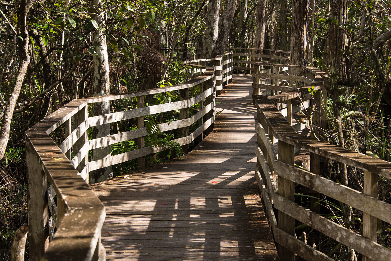 Boardwalk at Corkscrew Swamp Sanctuary, FL - January 2018