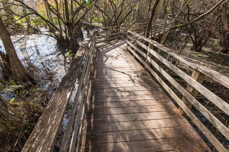 Boardwalk in Corkscrew Swamp Sanctuary, FL - January 2018
